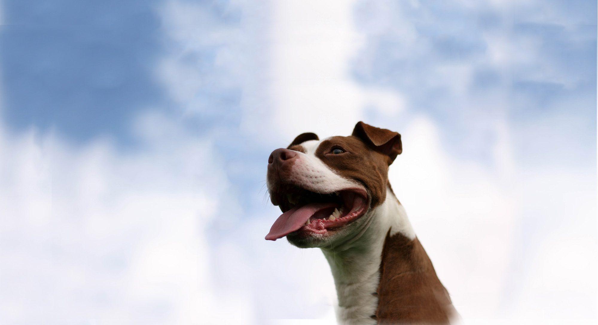Pets4Life Louisville